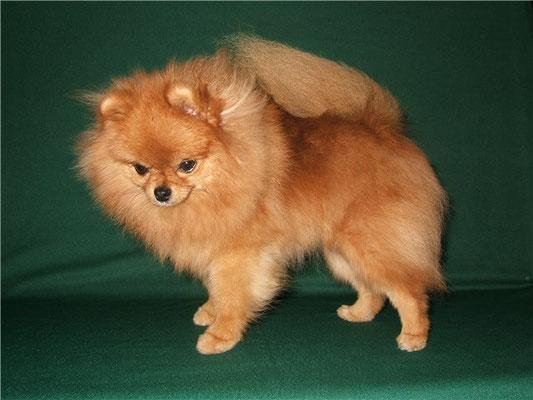 Самые умные породы маленьких собак — рейтинг, описание пород