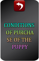 CONDITIONS FOR OBTAINING A PUPPY(for foreigners).